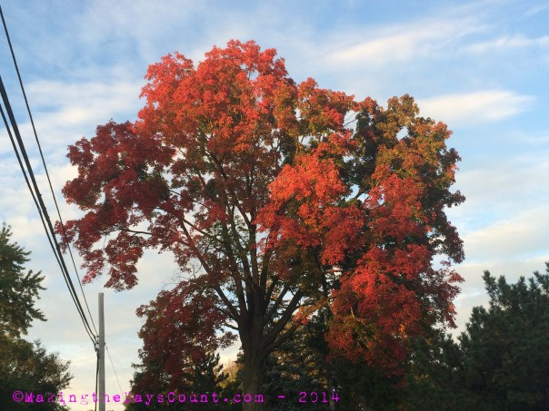 I found this tree in beautiful fall color and stopped to capture it ...