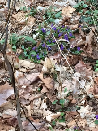 woodland flowers - awake and afloat