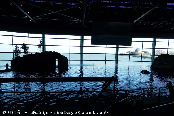 waiting for the aquatic show - lake Michigan and the Adler Planetarium in the background