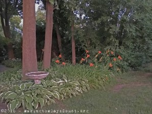 the daylilies from where I was working