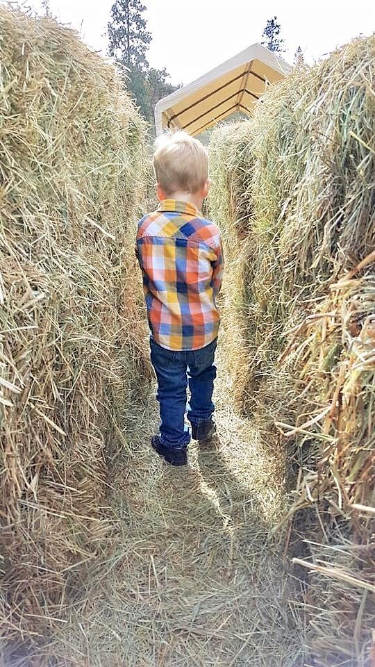 McMillan Farms Pumpkin Adventure! - hay maze last year