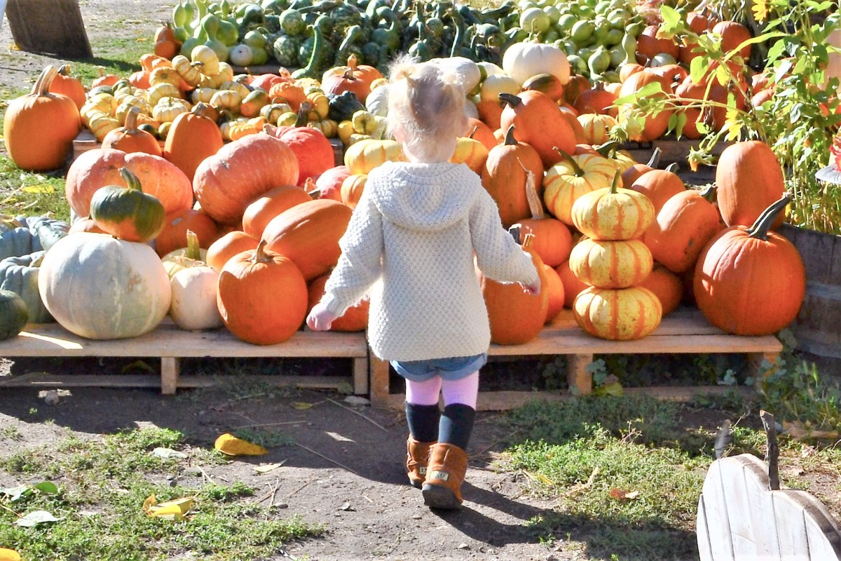 McMillan Farms Pumpkin Adventure! - pumpkins of all types