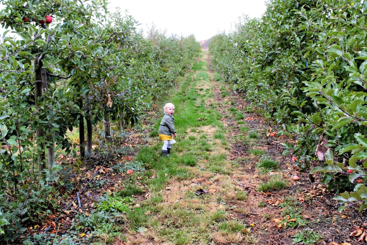 Davidson Orchard Adventure - night night apple