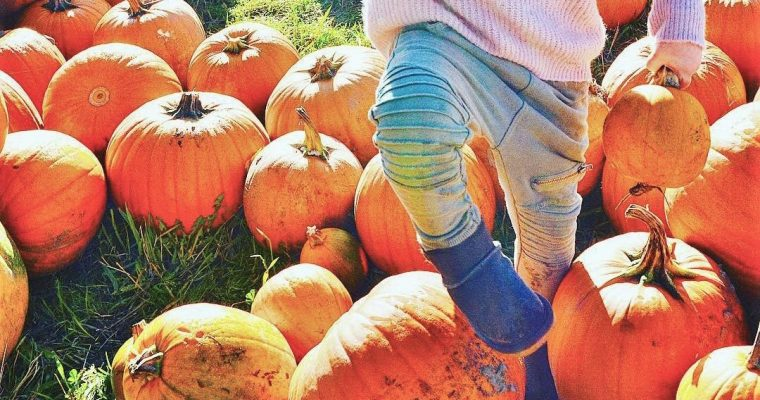 List of Our Favorite Fall Traditions: Including This Years McMillan Farms Pumpkin Patch Adventure!