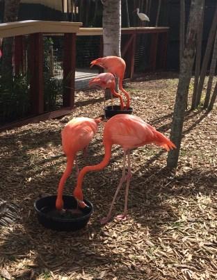 Flamingos Miami