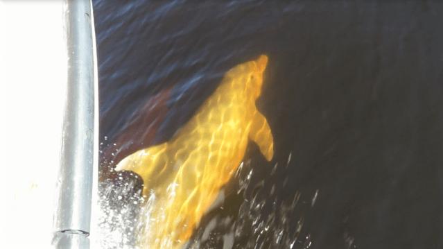 dolphin bow look