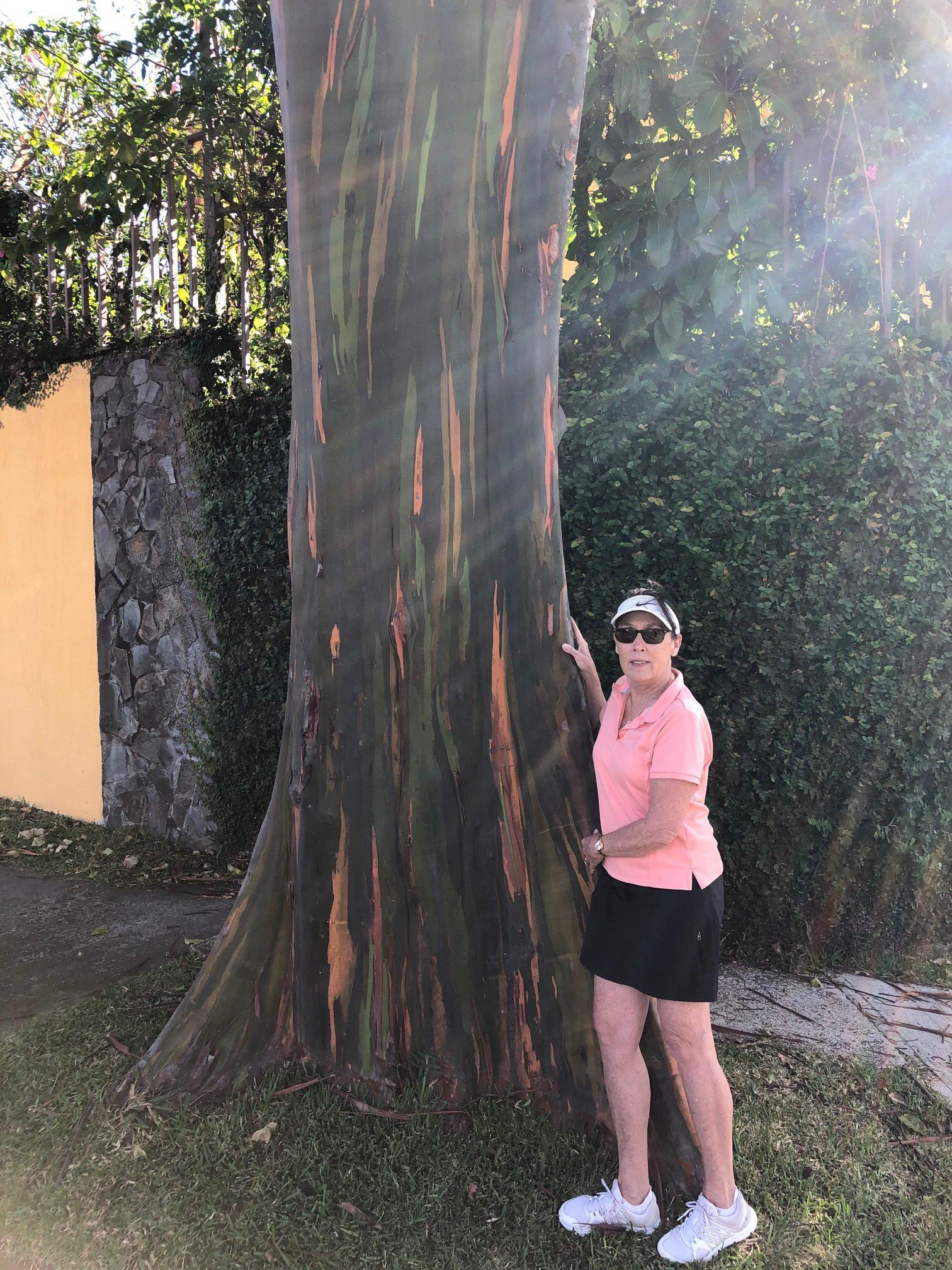 Rainbow Eucalyptus.jpg
