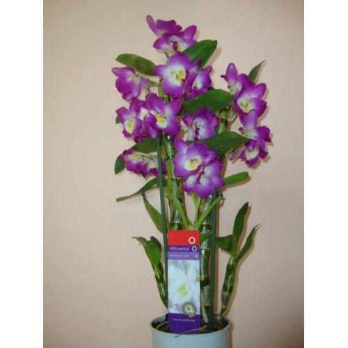 arzător de grăsime negru orhidee)