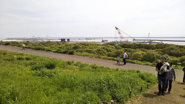 ひたち海浜公園 ネモフィラ