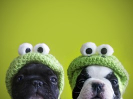 Funny Puppies With Hats