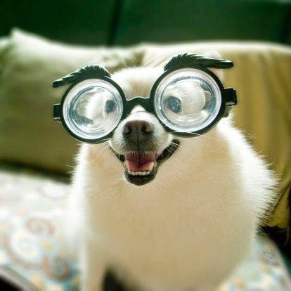 Silly Dog With Glasses