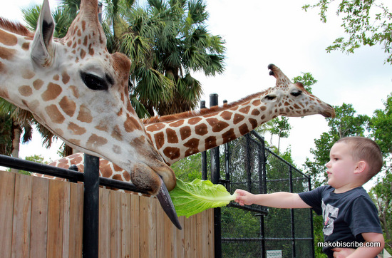 Fun Florida Summer Destination Naples Zoo