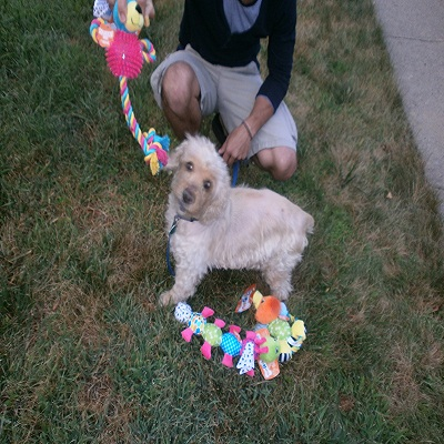Toys for Your Dog from the Toys R Us Pet Collection Sweepstakes