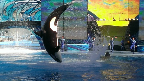 Sea World Pictures