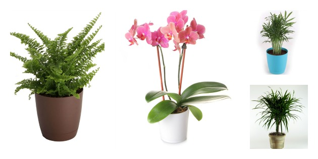 Celebrate Indoor Plant Week And Clean Your Air