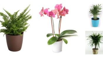 Use House Plants For Cleaner Indoor Air