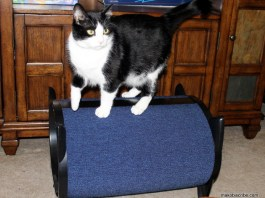 Top Five Holiday Gifts For Cat Owners