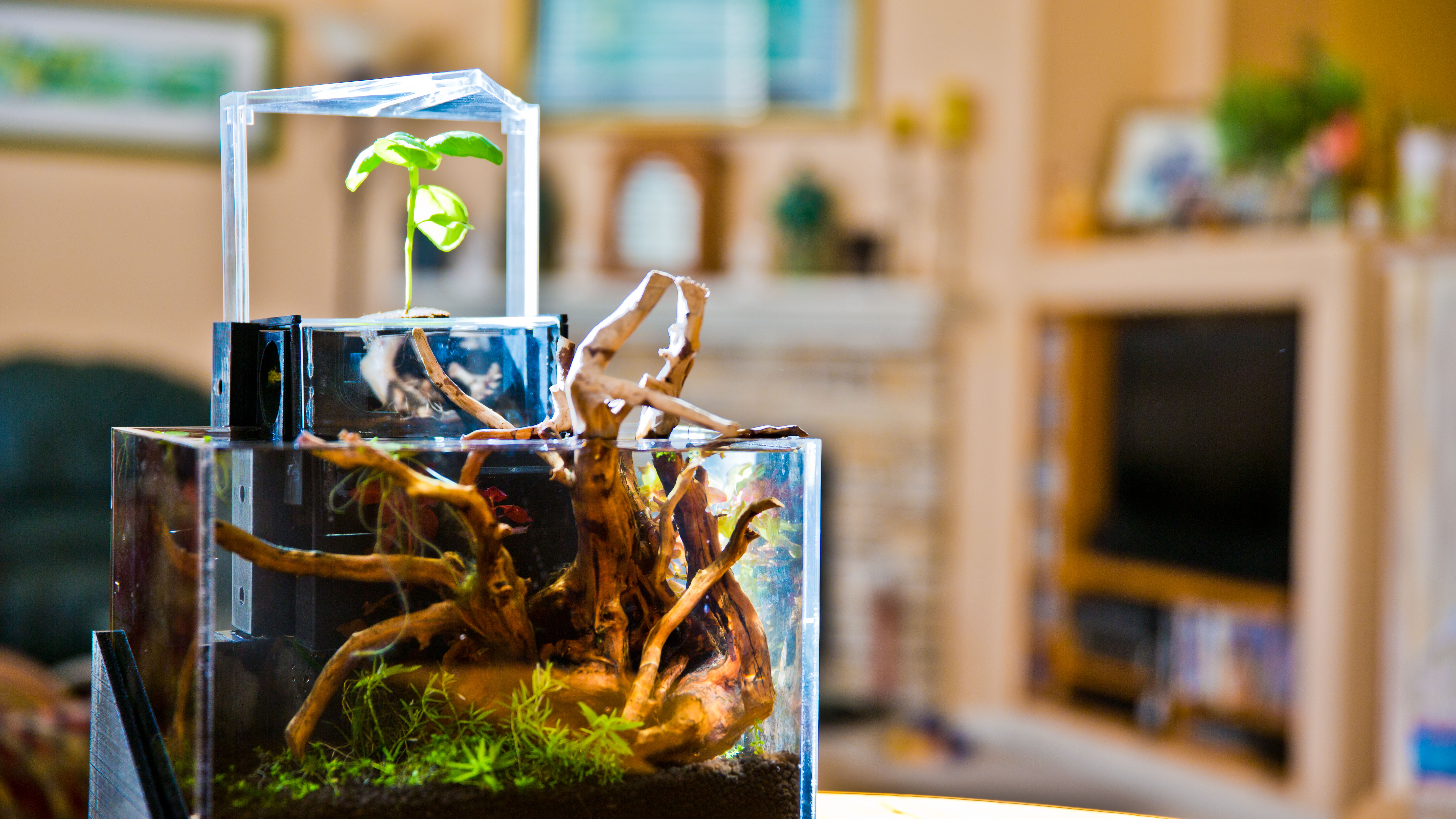 The EcoQube Is The Coolest Gift Ever!