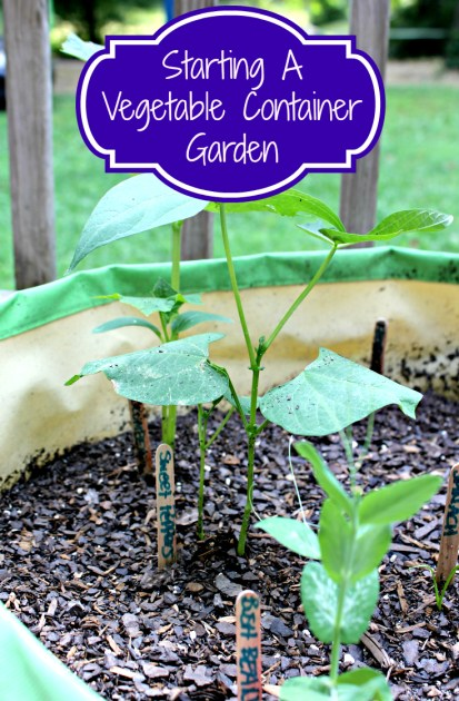 Starting A Vegetable Container Garden