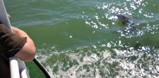 dolphins boating