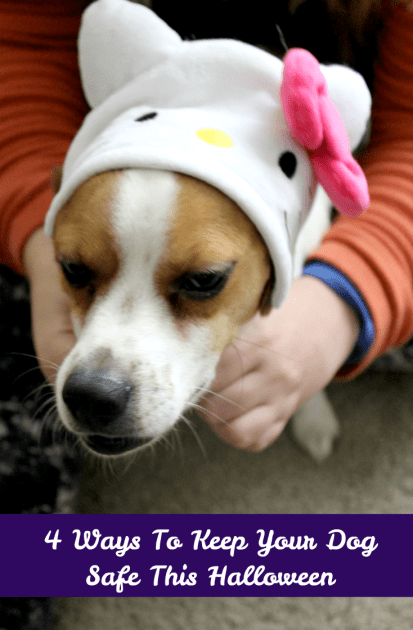 4 Ways To Keep Your Dog Safe This Halloween