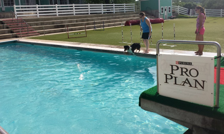 pool dogs