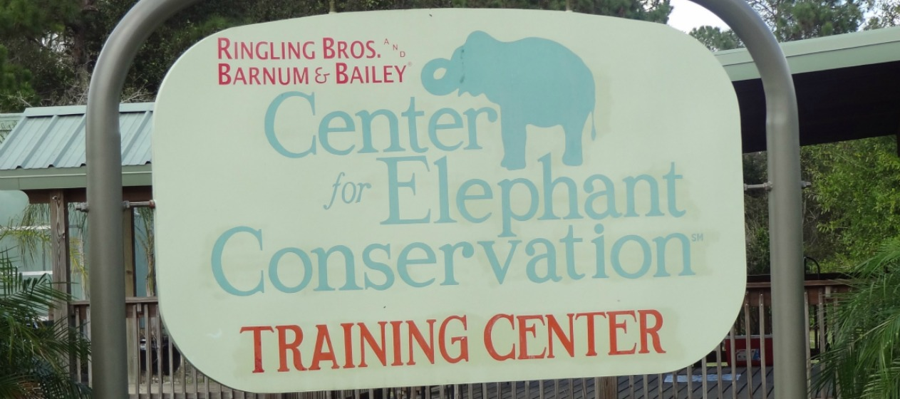 How Elephants Are Opening Doors To New Cancer Research #ringlingcec