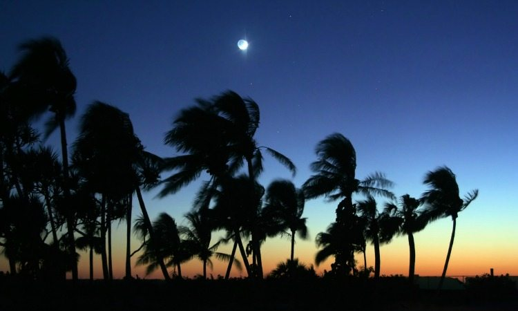 palm trees in wind after sunset