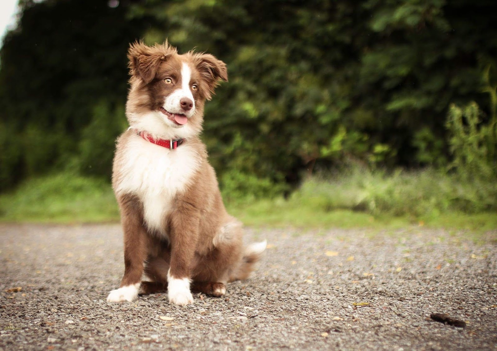 Why Does Flea Treatment Sometimes Not Work For Your Dog?