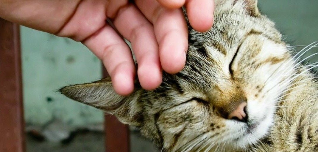 How Affordable Is Quality Cancer Treatments For Cats?