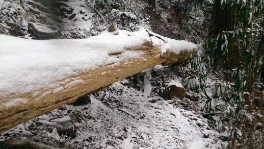 鳳来寺山の倒れた樹木のトンネル