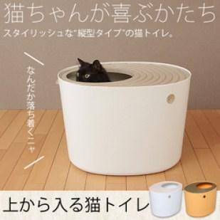 野良猫ショップ猫の上からトイレ