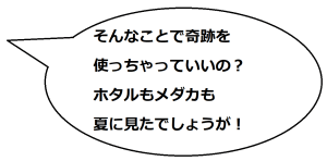 馬籠宿01文乃コメ01