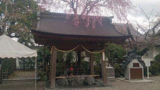 龍泉寺の手水舎と枝垂桜
