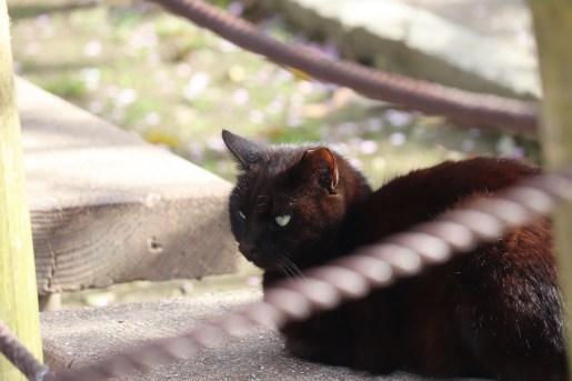曼荼羅寺の黒猫01