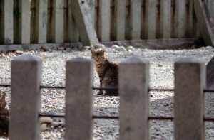曼荼羅寺の塔の近くの猫01