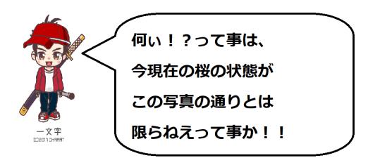 奥山田桜1の一文字コメ1