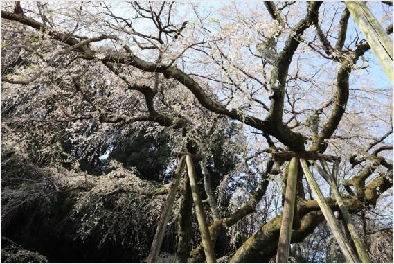 奥山田桜4の2-7