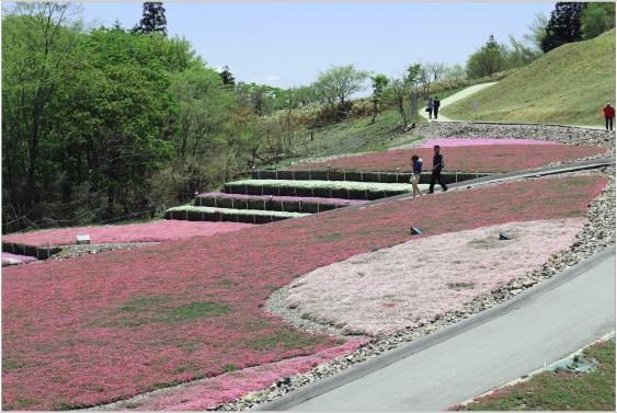 茶臼山3の19芝桜の散歩