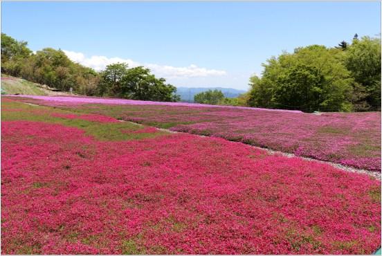 茶臼山5の6花壇