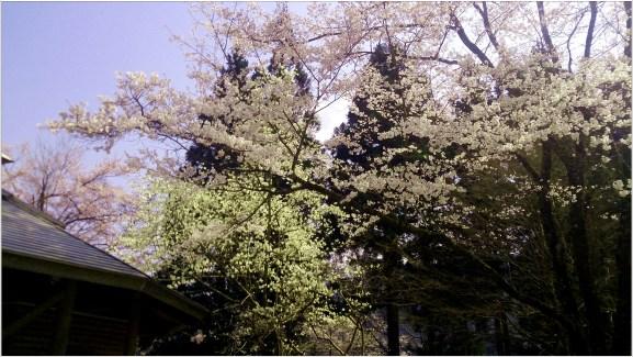 淡墨桜4の6-2公園