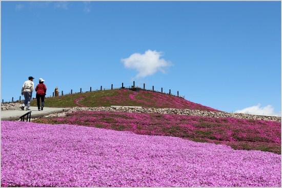 茶臼山5の3芝桜の丘