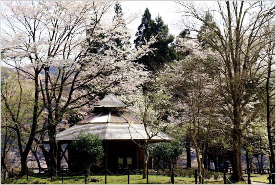 淡墨桜4の6-1公園