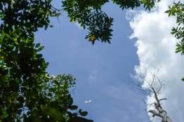 スケスケのネグリジェのような白い黒斑蝶に遭遇