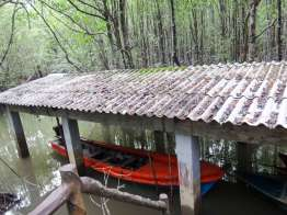 Ngao Mangrove Forest Research Center