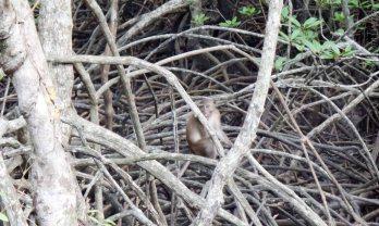 Mu Ko Ranong National Park & Ngao Mangrove Forest Research Center
