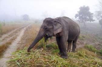 Thom's Pai Elephant Camp を通り抜けて山へ