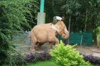 White Elephant in Nay Pyi Taw
