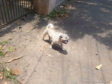 Dog near hotel