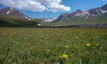 キルギスの花: アラベル峠